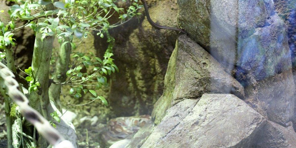 rocher grotte aux loups